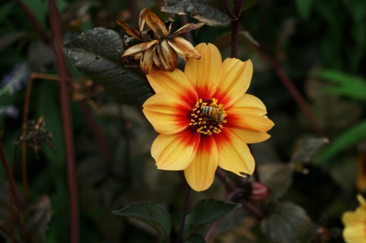 Melbourne Botanic gardens resized0005