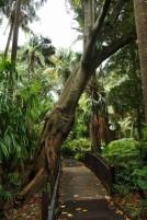 Melbourne Botanic gardens resized0008
