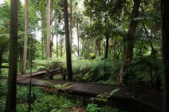 Melbourne Botanic gardens resized0009