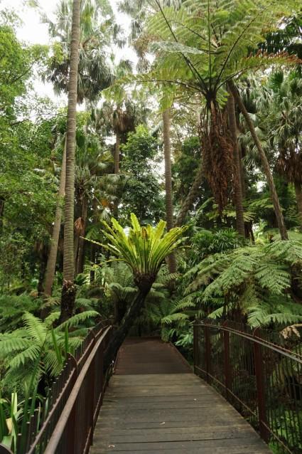 Melbourne Botanic gardens resized0010