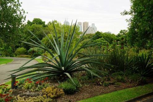 Melbourne Botanic gardens resized0011